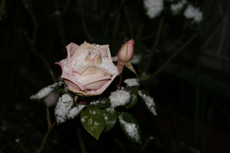 Snow!  My Favourite Photo