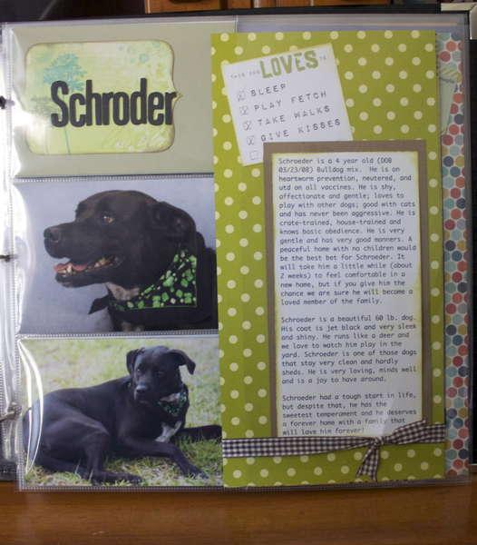 DITR Adoptables - Schroder
