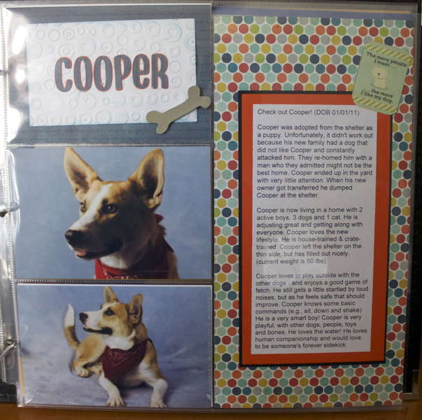 DITR Adoptables -- Cooper