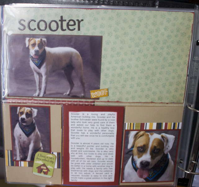 DITR Adoptables -- Scooter