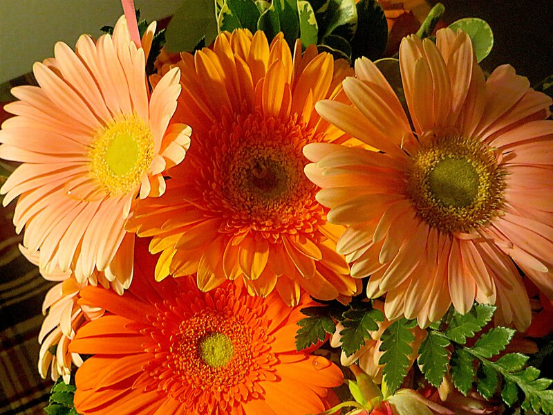 My Beautiful Birthday Gerber Daisy Flowers