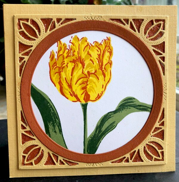 Tulip--no type of card