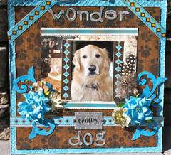 Bentley The Wonder Dog