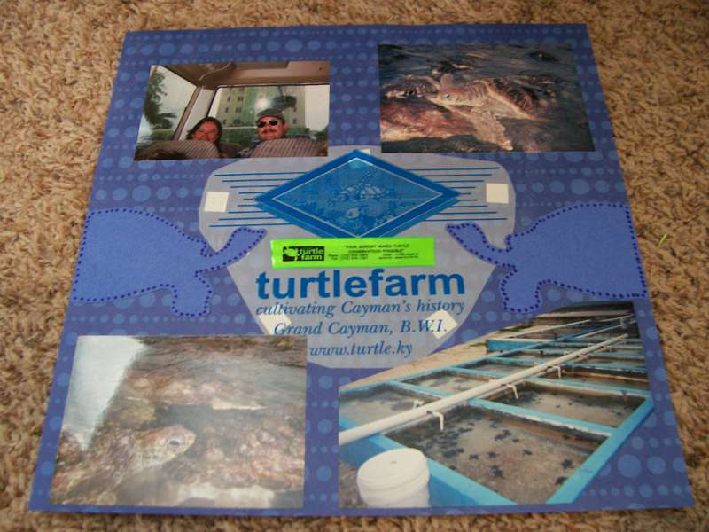 The turtle Farm