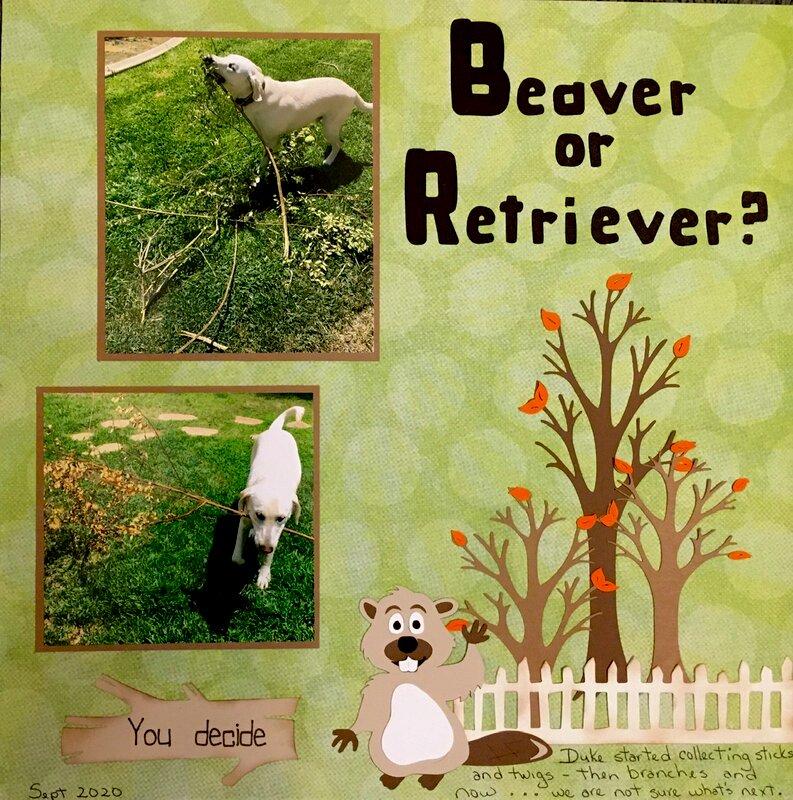 Beaver or Retriever? (you decide)
