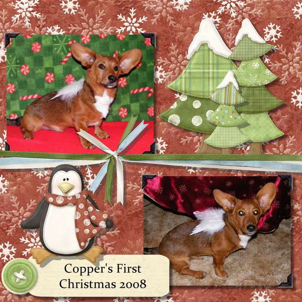 Copper's First Christmas 2008