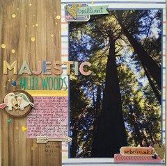 Majestic Muir Woods