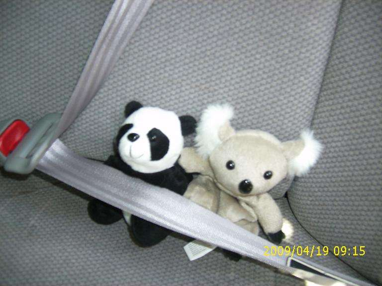 Strapped in for safety!