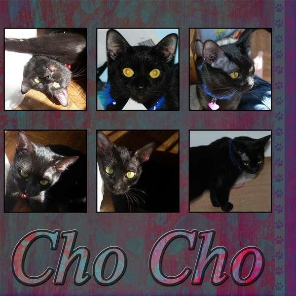 Cho Cho
