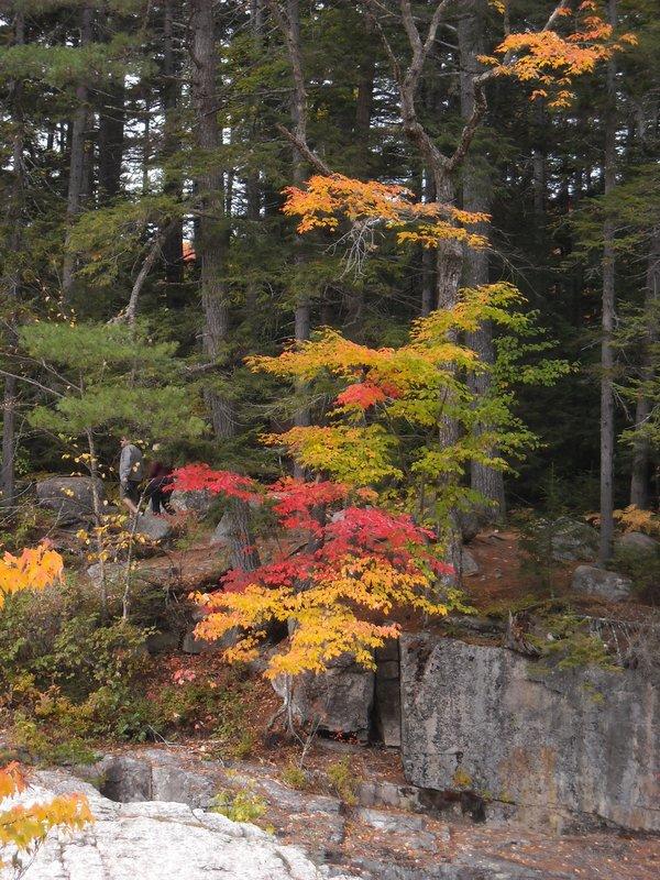Pretty Autumn Color