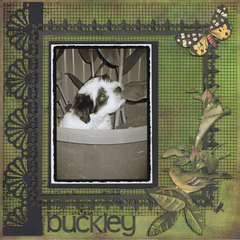 Buckley....our new babe