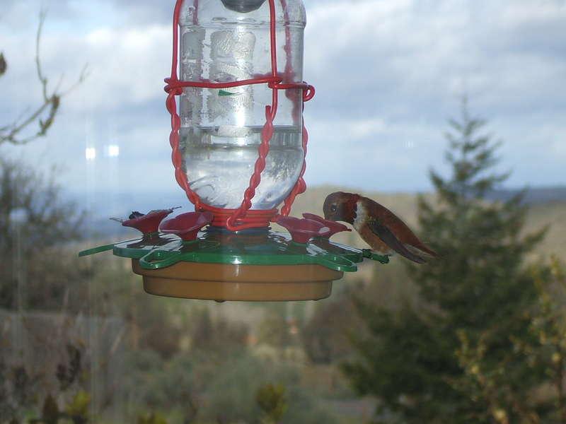 [20] hummingbird