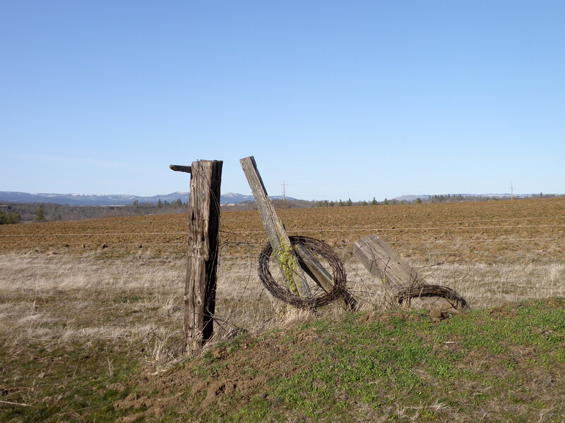 MAR 2021 #2 Fence posts/Barbwire