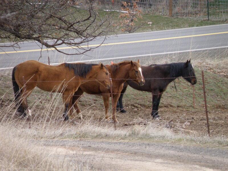 MAR 2021 #3 Horses