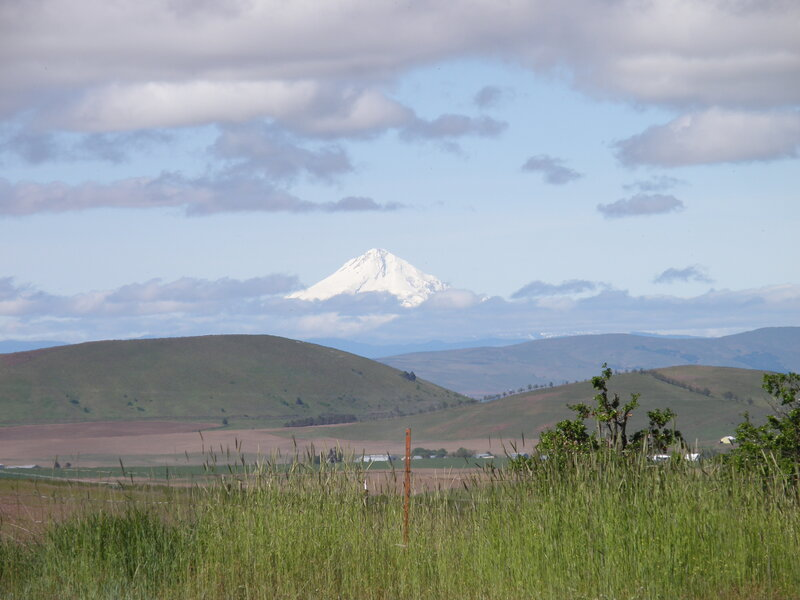 MAY 2020 ~ MINI #5 In the Distance ~ Mt Hood