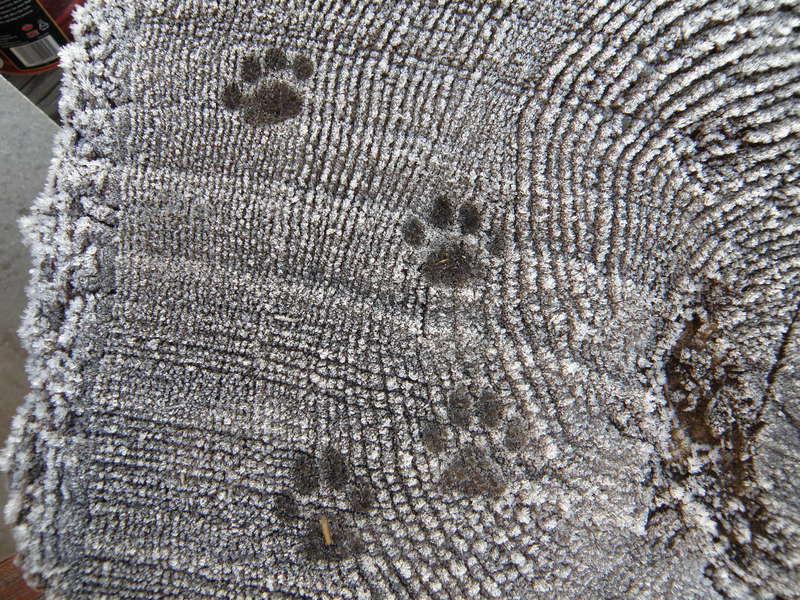 POD...NOV #15/15...Paw prints in frost