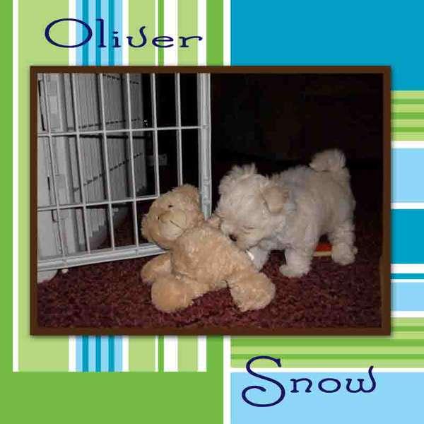 Oliver - 8 weeks