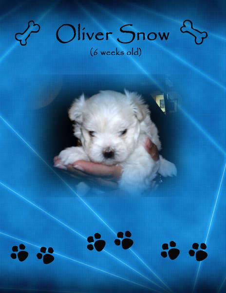 Oliver - 6 weeks