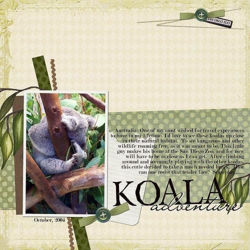 Koala Adventure
