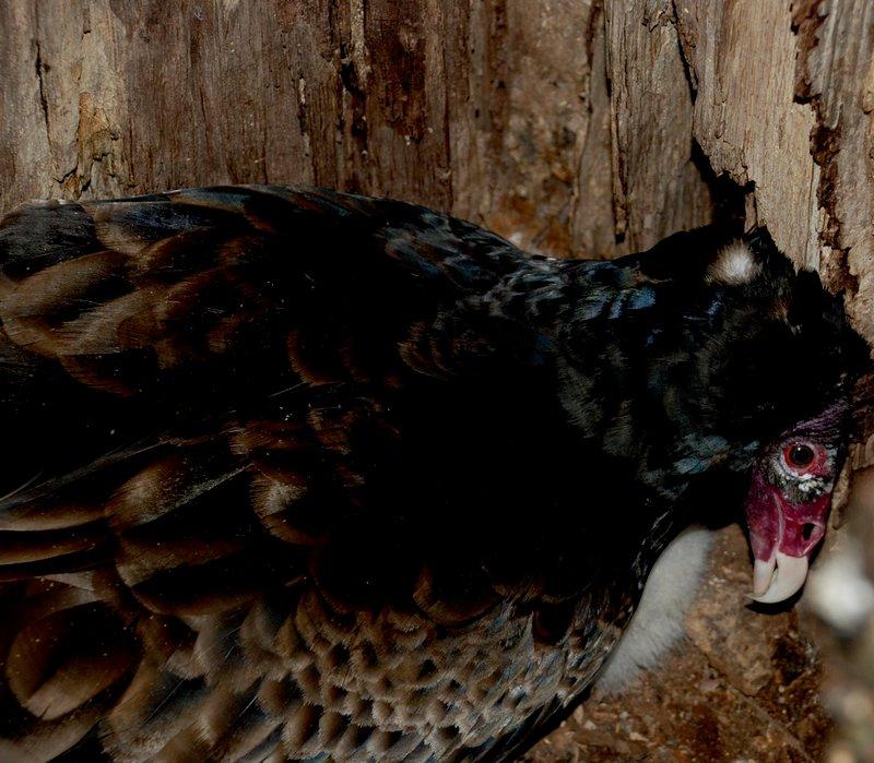 Baby Vulture Teaser