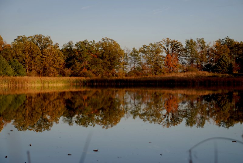 Reflections on our pond