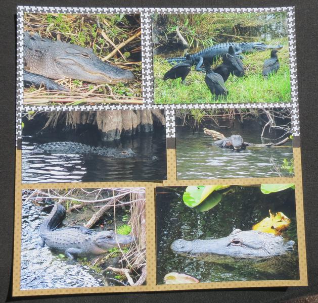 Florida Everglades - Page 4