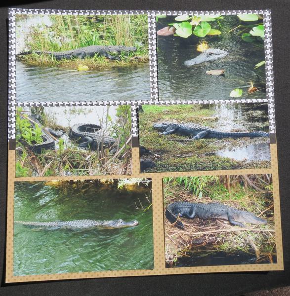 Florida Everglades - Page 5