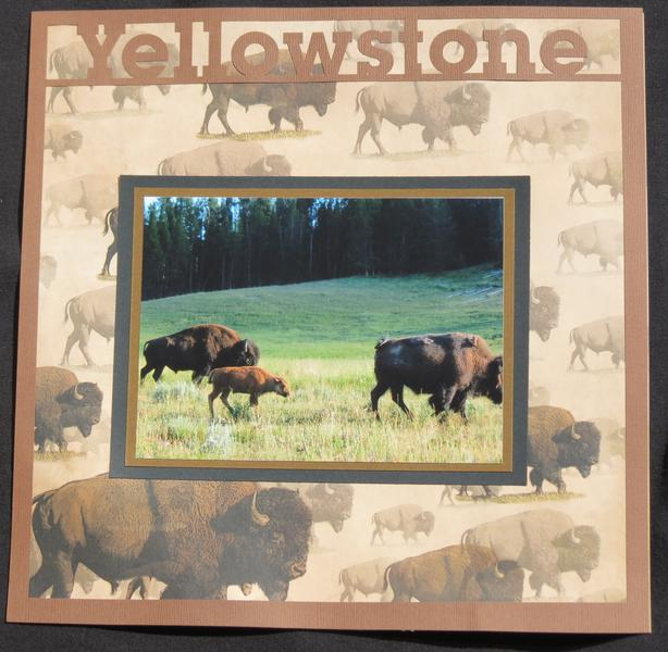Yellowstone Bison Left