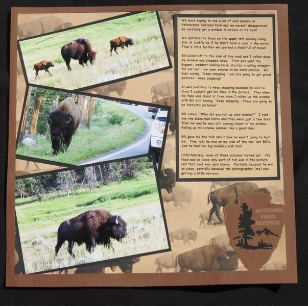 Yellowstone Bison Right