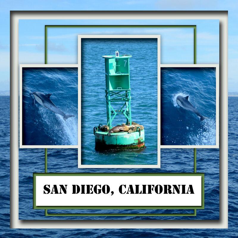 42 San Diego - Whale & Dolphin Trip