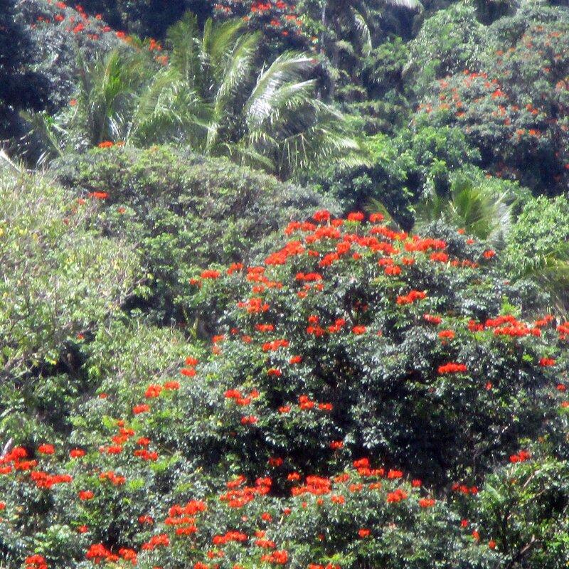 372 Rabaul, Papua New Guinea