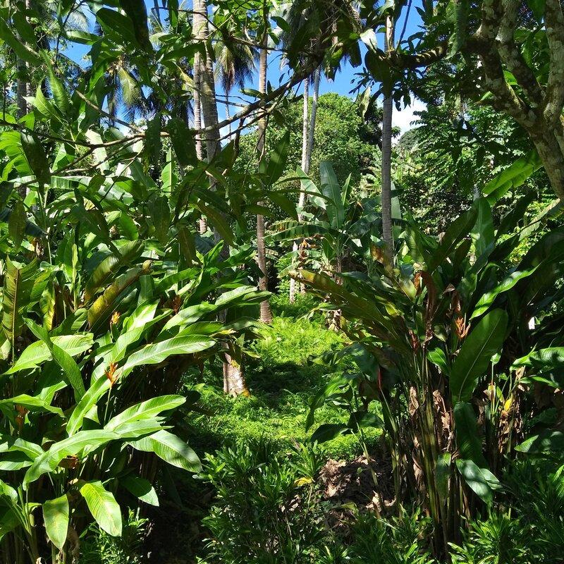 375 Rabaul, Papua New Guinea