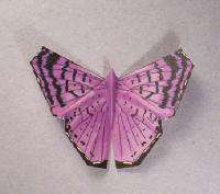 Origami Butterly