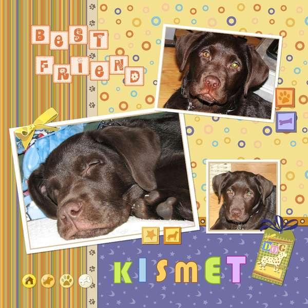 Our Chocolate Labrador - KISMET