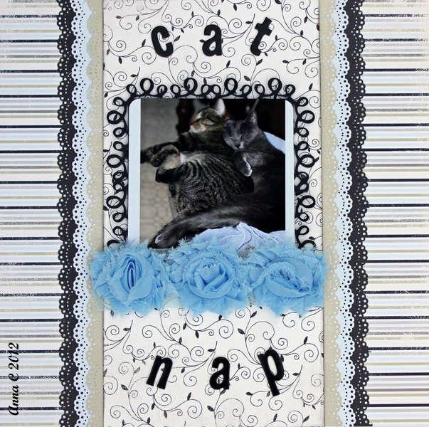 *** FUNTOOLAS*** CAT NAP
