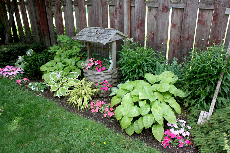 Garden and bedding plants on July 4th