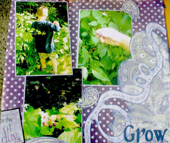 Where the Blackberries Grow.........