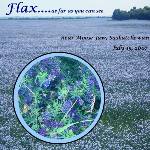 Flax Field, Moose Jaw