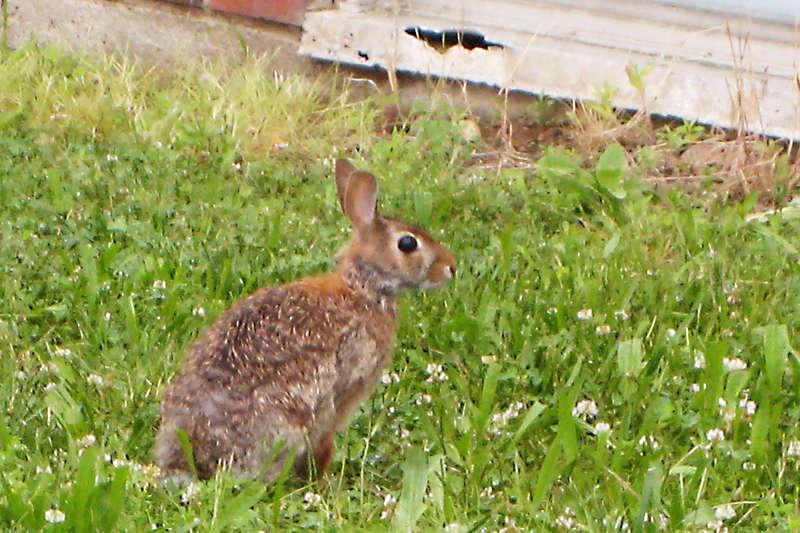 June 11 - Poor Soggy Bunny