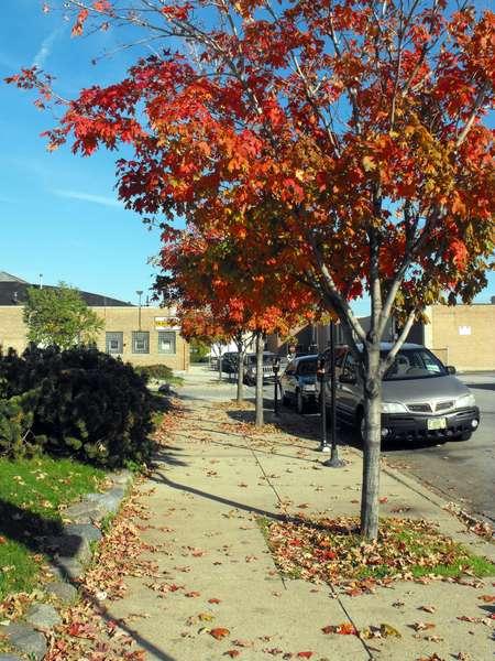 2008-10 #09. Fallen Leaves (8 pts)