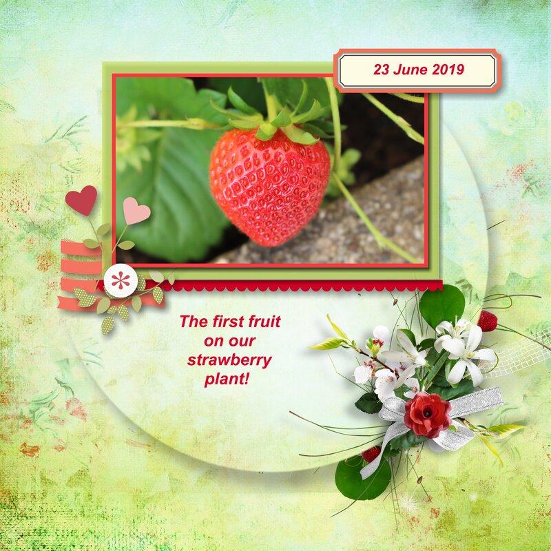 2019 - Summer in my Garden - my first ever strawberry
