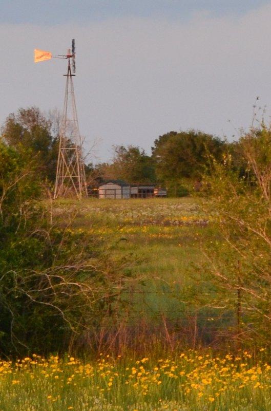 TX Windmill Photo Fun #5