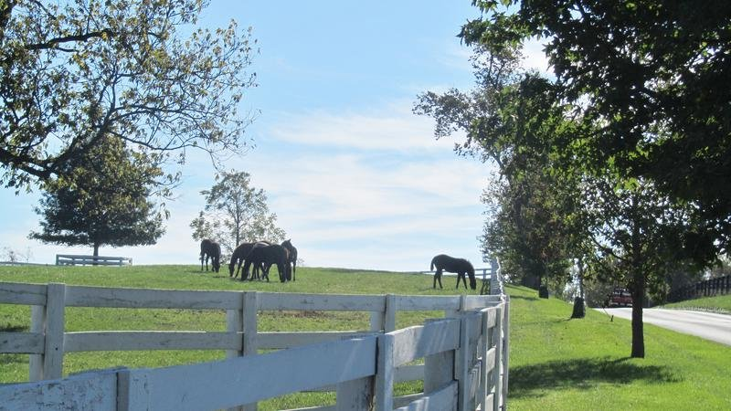 Horse Farm in Lexington