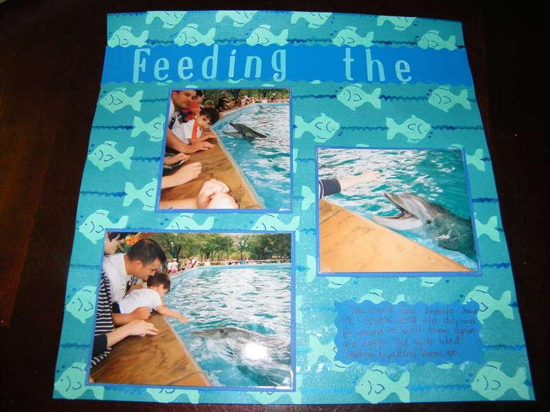 Feeding the Dolphins 1