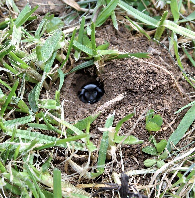 Bumble Bee Nest