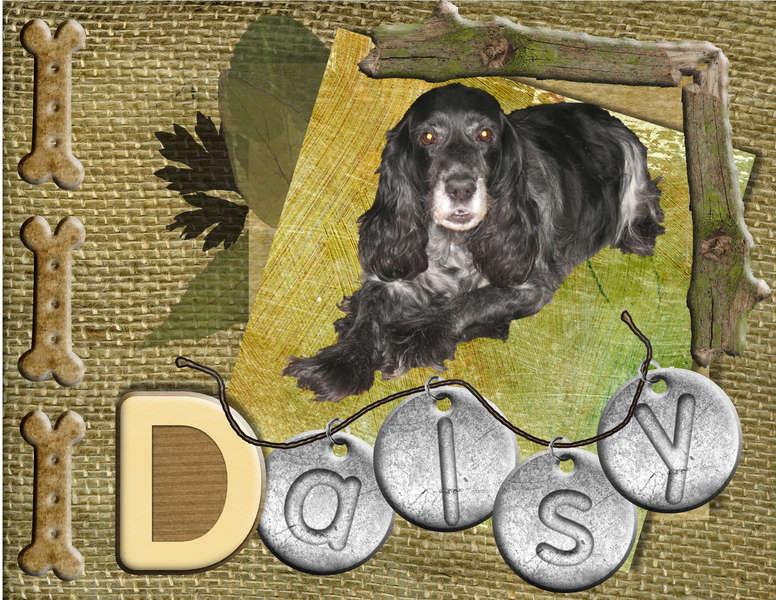 My dog Daisy