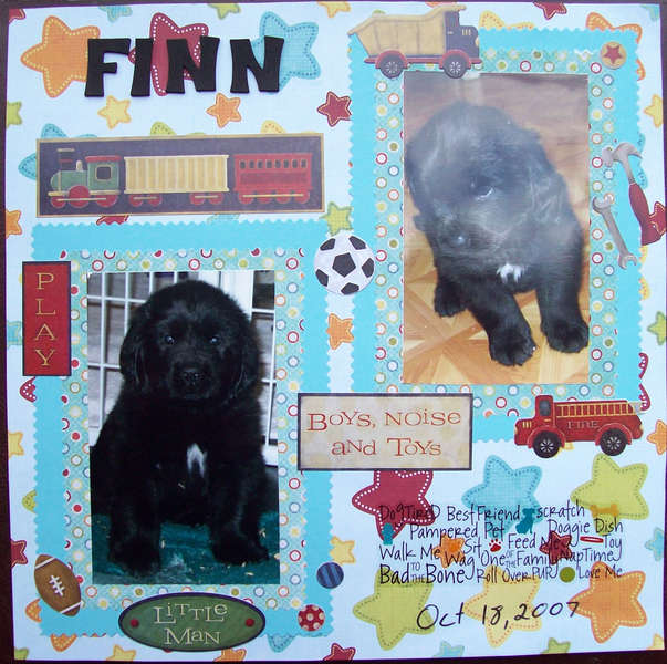 Finn pup
