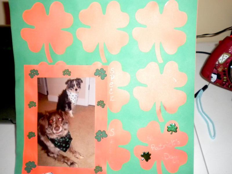 My dogs on St.Patrick's Day