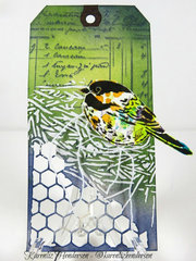 Bird Tag 1