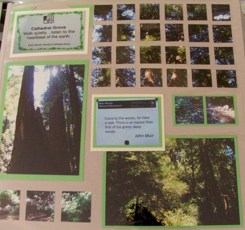 CA 2010 - Muir Woods